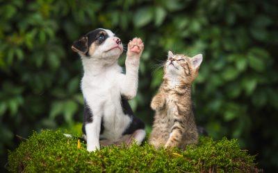 Dermatologia em clínica de pequenos animais